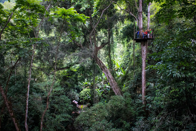 Jungle Zipline Scenery