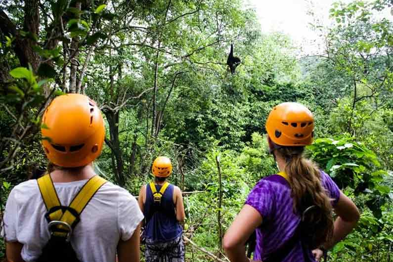 Original zipline with wild gibbons